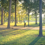 Parks at Pine Forest