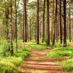Nature Trails at Pine Forest